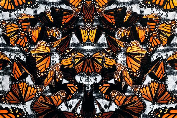 830a1c2387 butterflies.5