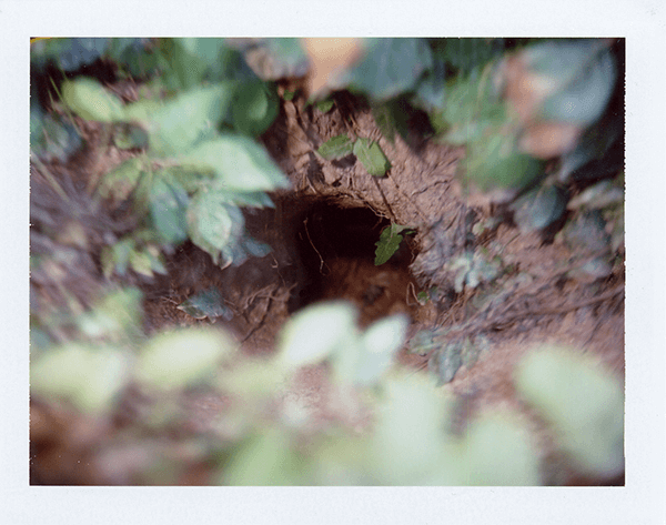 Image in Show The Woods